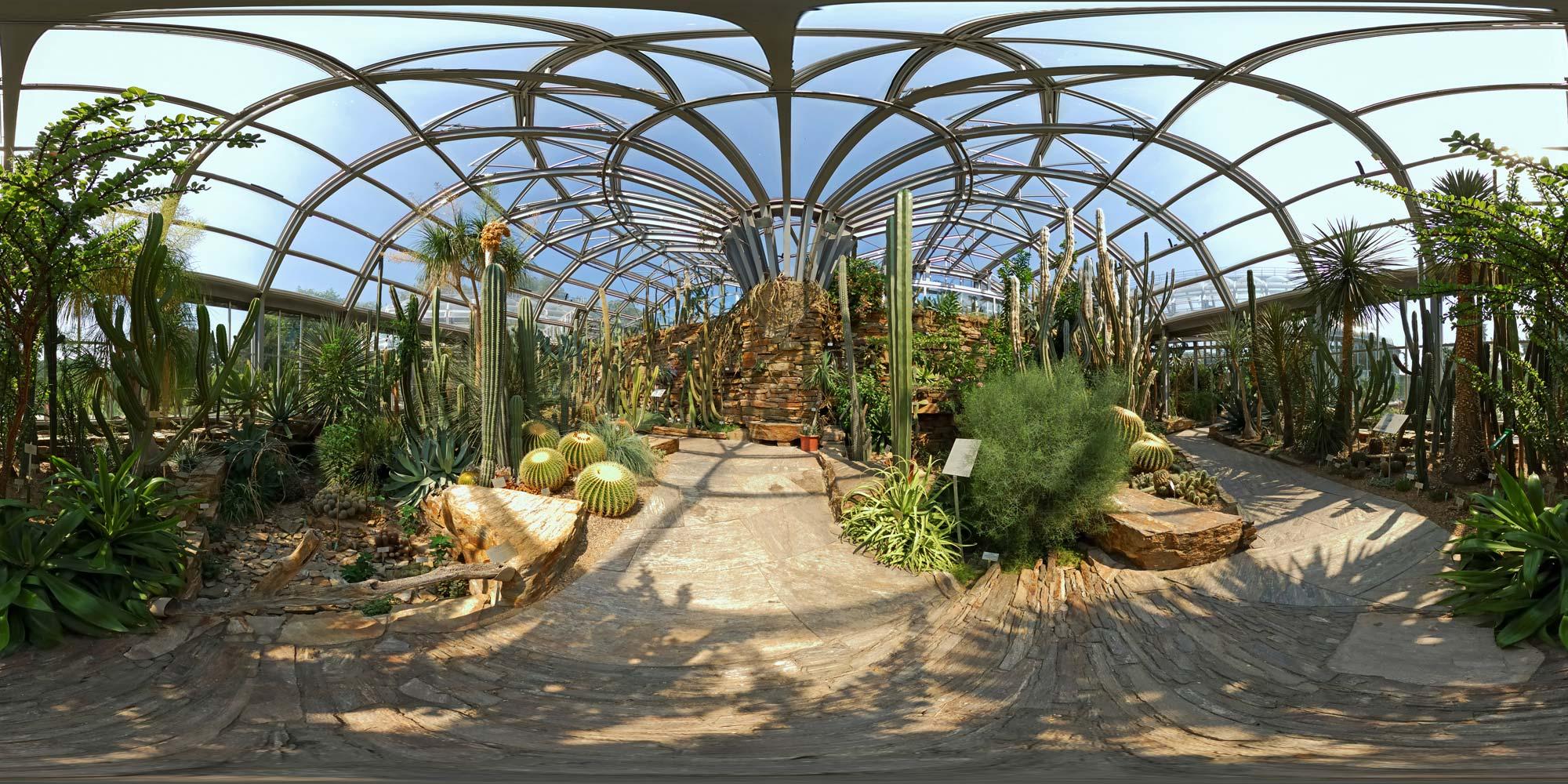 Botanischer garten  Kubische Panoramen - Panorama-Foto: Botanischer Garten - Kakteen 2